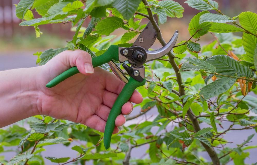 Soins pour vos arbres et arbustes