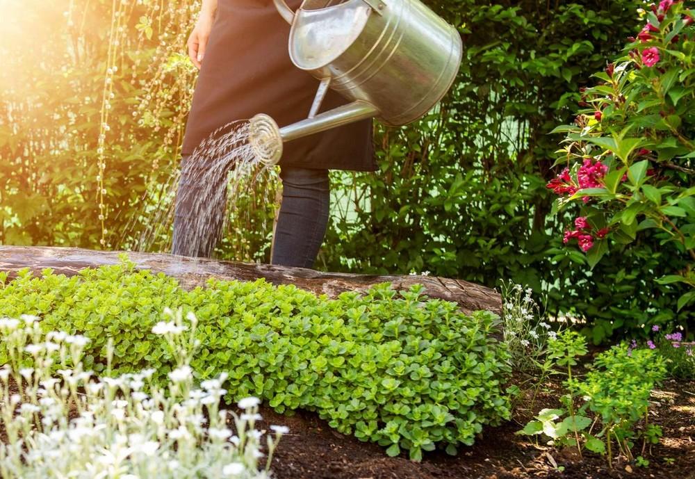 Comment prendre soin de vos plantes en été ?